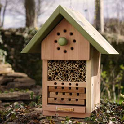 Educational Solitary Bee Nester