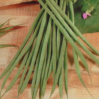French Bean Aguillon
