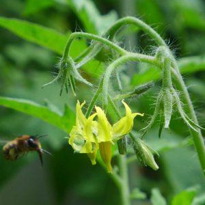 Garden Bees 7