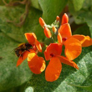 Garden Bees 10