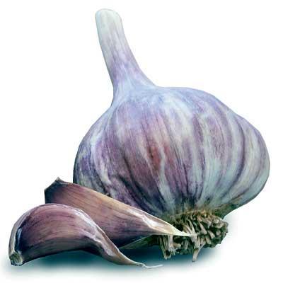 Garlic Red Duke