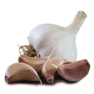 Garlic Tuscany Wight