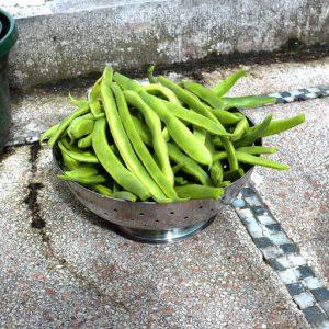 Weekly harvest in summer