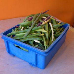 End of season harvest