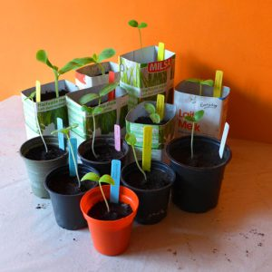 Starting seeds indoors in spring