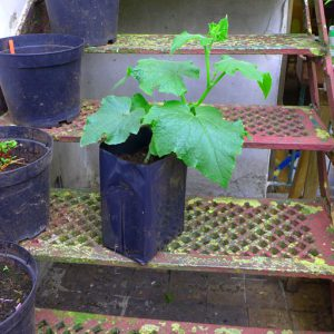 Grow plants on before planting out