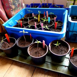 Start early from seed indoors