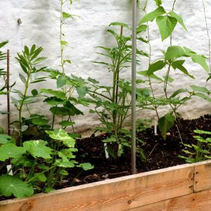 Support plants with sticks