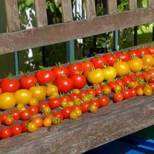 Pick tomatoes regularly