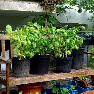 Half cropping plants
