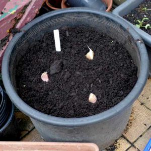 Spacing in pots 1