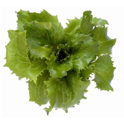 Jack Iceberg Lettuce