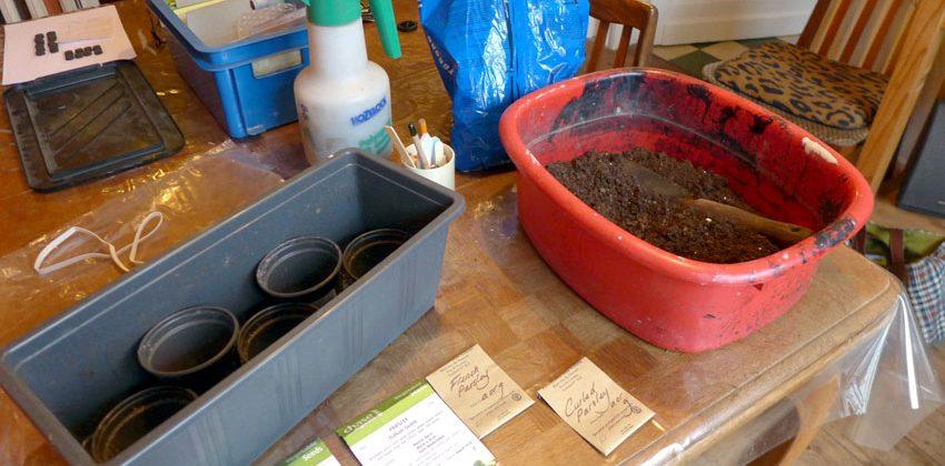 Post: Kitchen table gardening