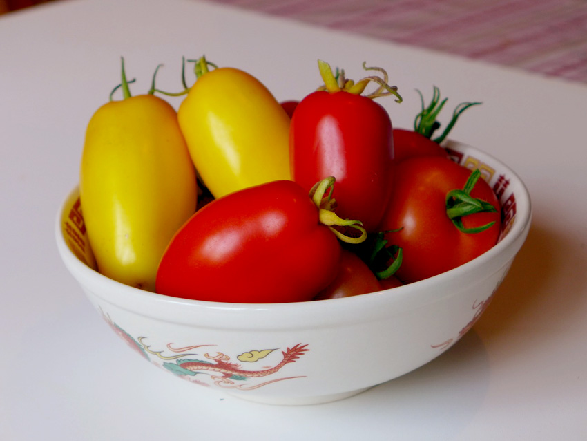 Larger paste tomatoes