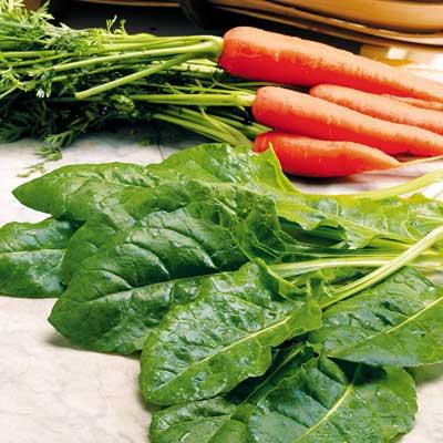 Leaf Beet - Perpetual Spinach