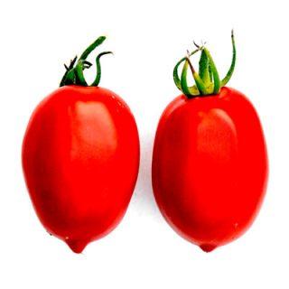 Martin Amish bush tomato