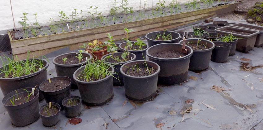 New Year Gardening featured