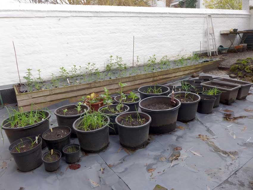 New Year Gardening