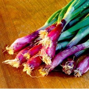 Onion Lilia