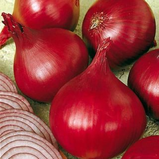 Onion (Organic) Seeds Red Baron