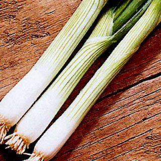 Onion Ramrod