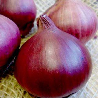Onion Sets Red Baron