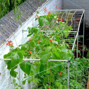 Overhead netting for beans