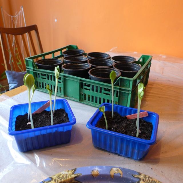 Seedlings ready for separating