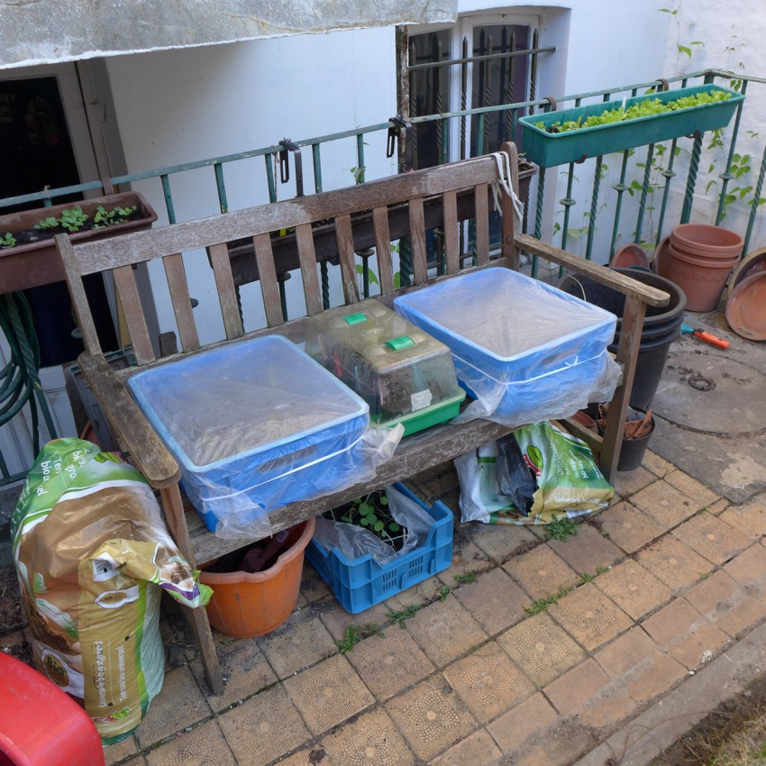 Outdoor protection for seedlings