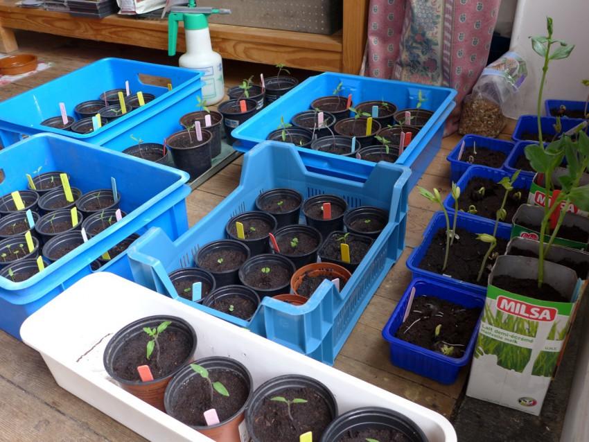 Seedlings for moving