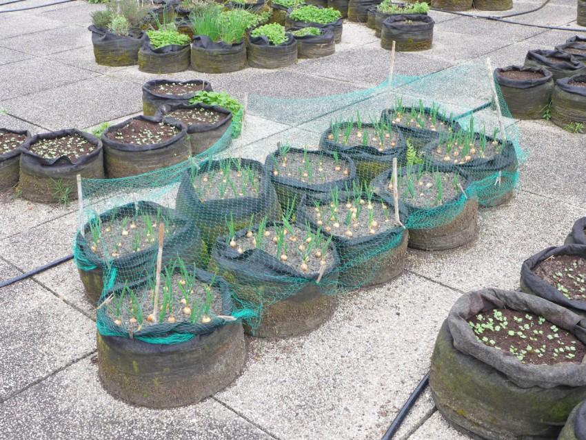 Soil bags
