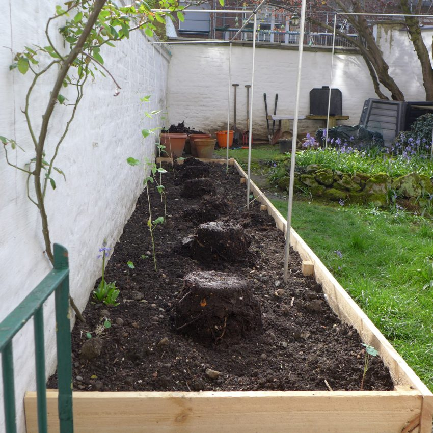 Feed for raised bed