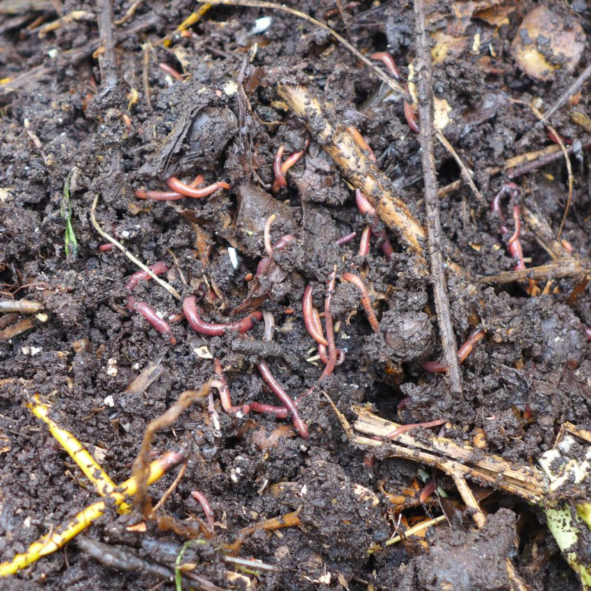 Worms making compost