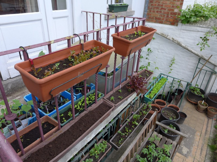 Balcony salad garden