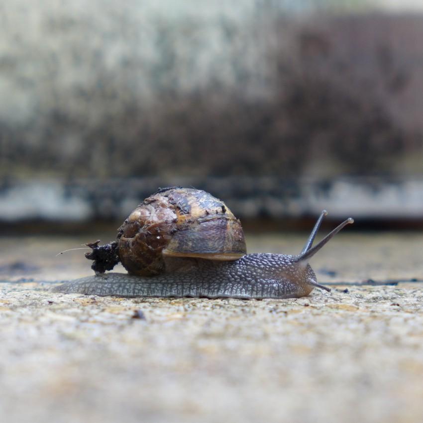 neighbourhood snail