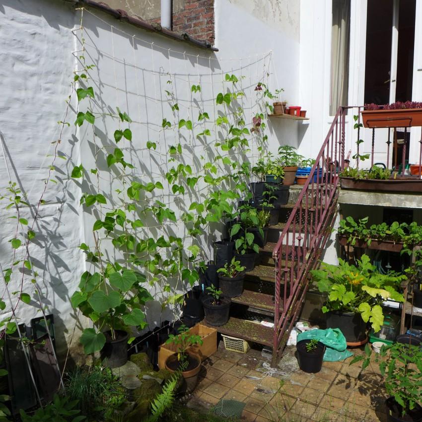Stair garden