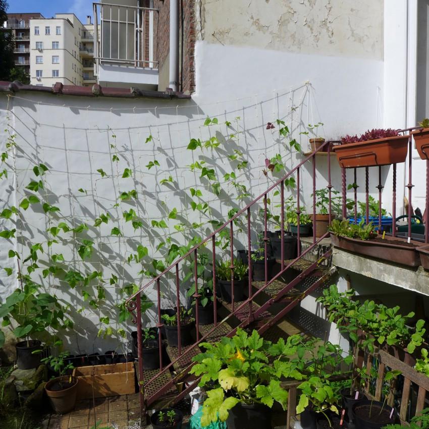Stair wall garden