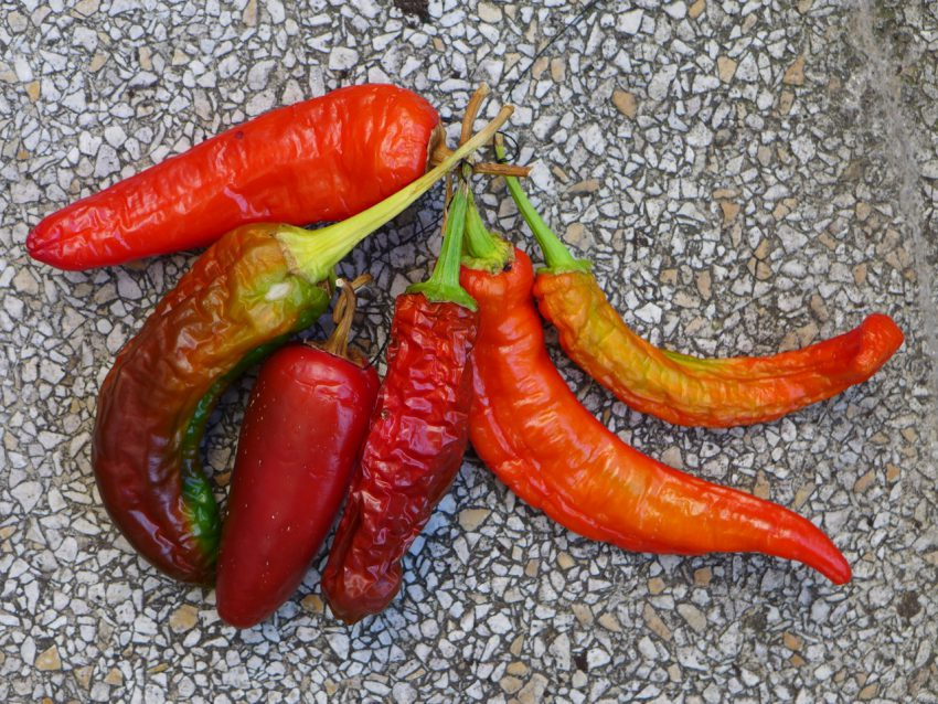 Air dried peppers