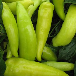 Pepper Hungarian Hot Wax