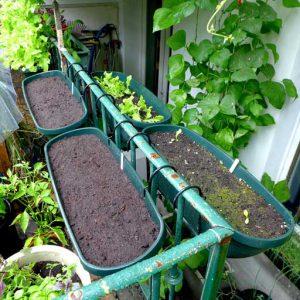 Plant seeds for rain