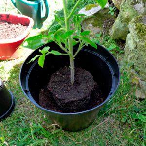 Planting deep