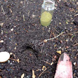 Planting starts