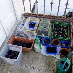 Plants on outside