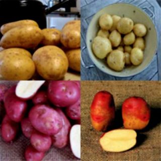 Potato Collection Cooks Choice