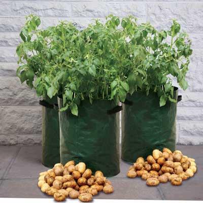 Potato Patio Planters