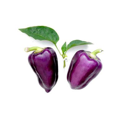 Purple Pepper Oda