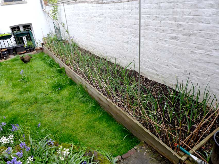Raised bed and cat proof fence