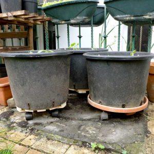 Raised pots