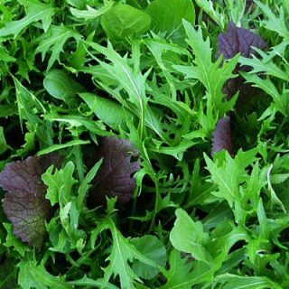 Salad Mix Spicy Greens