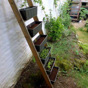 Salad ladder